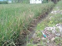 Pencemaran di kota Malang Masih Terjadi di Sudut-sudt Kota