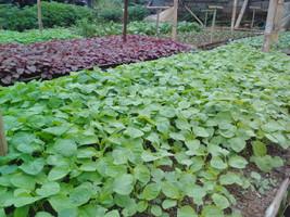 Petani organik modal telaten