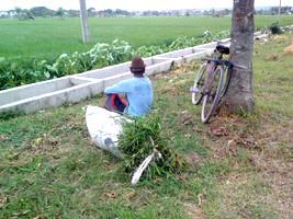 Petani organik, modal telaten bisa jadi raja