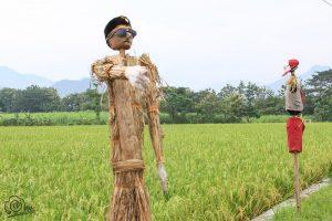 Cara mengusir burung pemakan padi