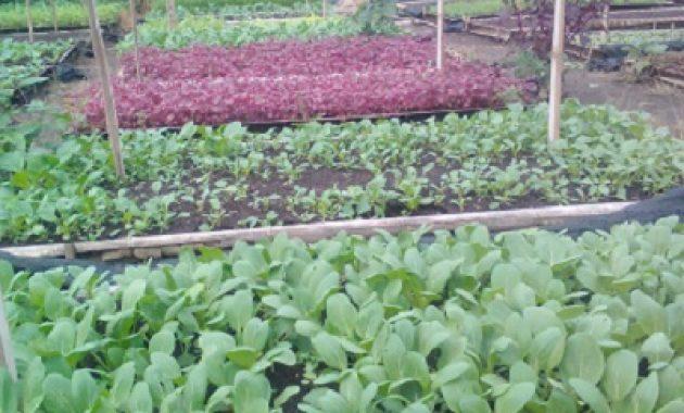 kupas tuntas kendala pertanian organik