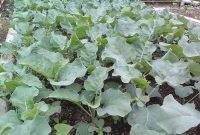 kupas tuntas berbagai kendala pertanian organik