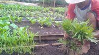 tips-menjadi-petani-sukses